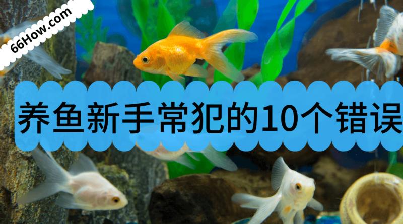 养鱼新手常犯的10个错误