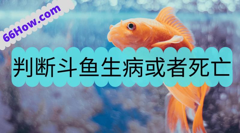 判断斗鱼生病或者死亡的10个方法和现象